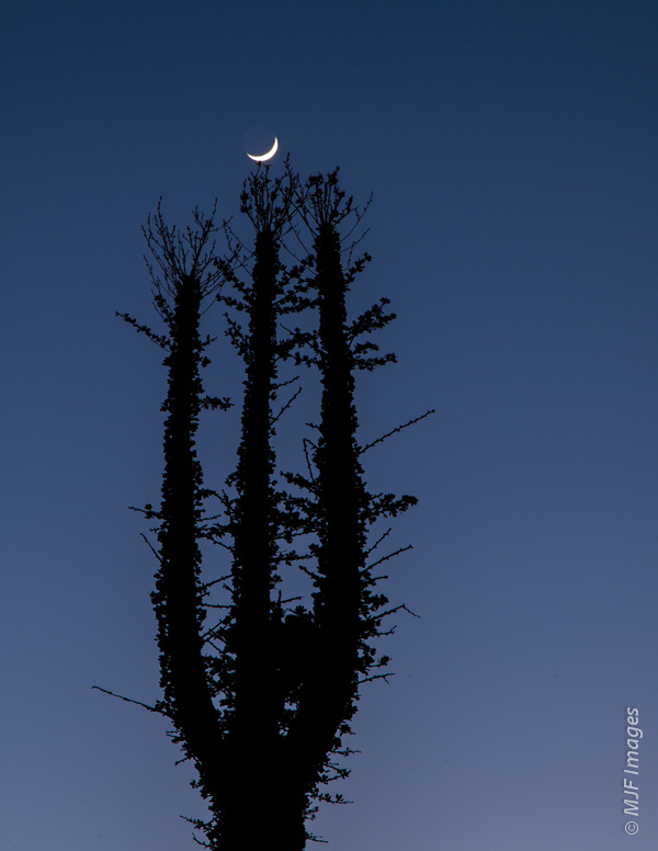 The crescent moon at blue hour in the desert of the Baja Peninsula, Mexico.