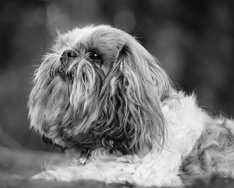 Thinking about the old days: my dog Charl