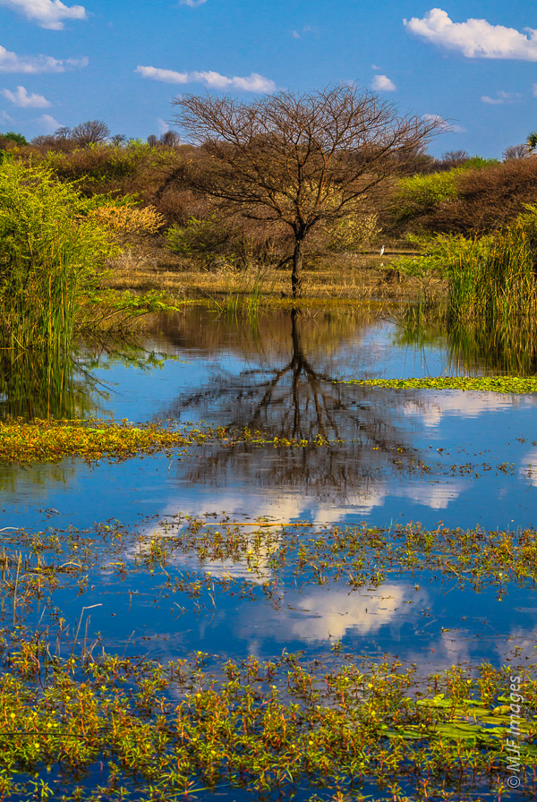 This shot from the Okavango Delta would lack a clear subject if the tree was not reflected so nicely.