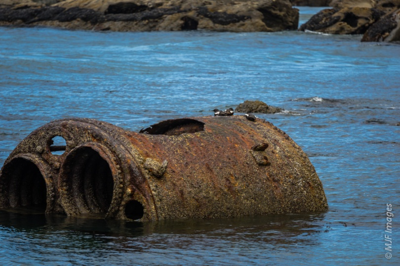 The old boiler in Boiler Bay is used as a perch by seabirds.