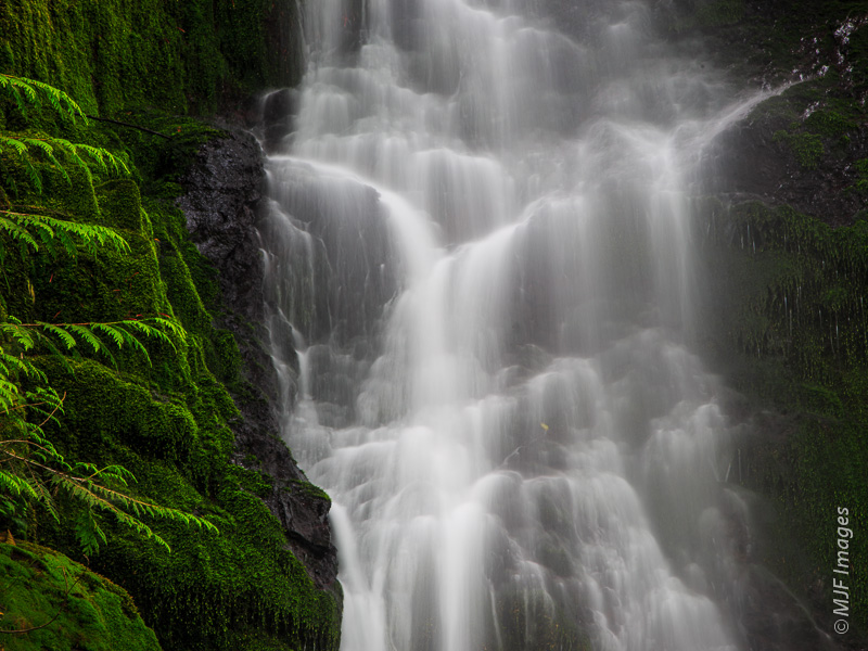 A small waterfall in Quinalt Rainforest on the Olympic Peninsula, Washington.