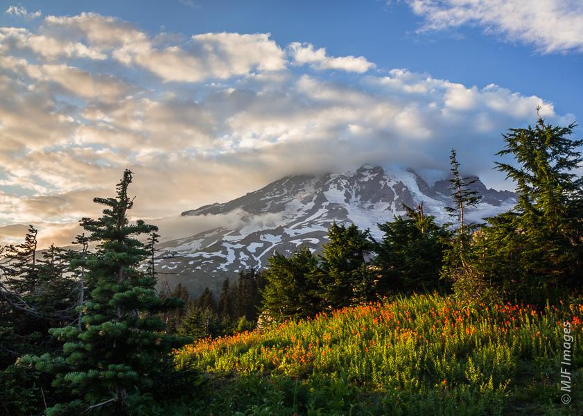 Mount Rainier's Paradise Park