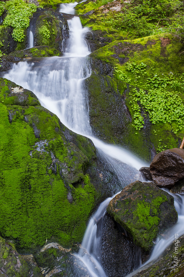 A small waterfall plunges down a narrow verdant ravine at Mount Rainier.