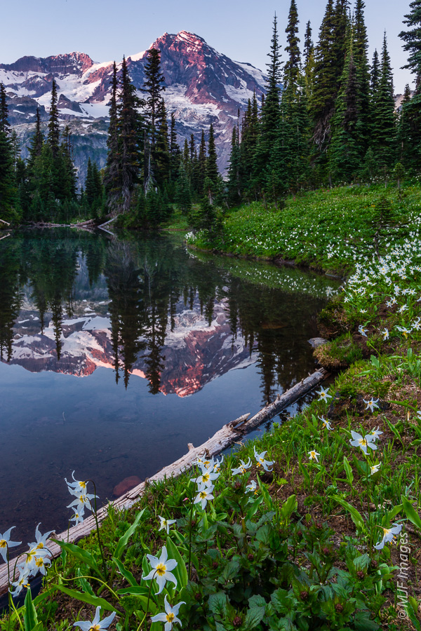 One of the tarns (small lakes) in the meadows of Indian Henry's Hunting Ground at Mount Rainier National Park.
