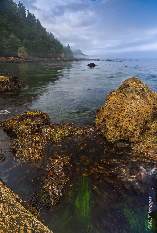 Life thrives along the rugged northern Olympic Coast in Washington.
