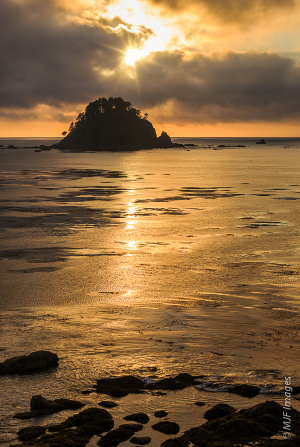 A large sea stack and beautiful gold reflection from the sea highlight sunset at Cape Alava on Washington's Pacific Coast.