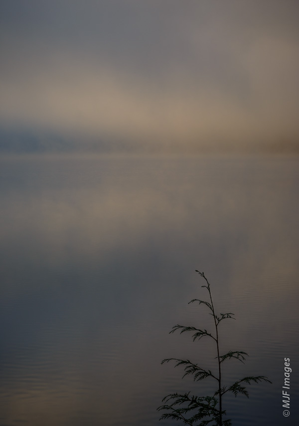 Recent foggy shot at Lost Lake. While sharpness is somewhat important for the baby tree, great depth of field is not that important.