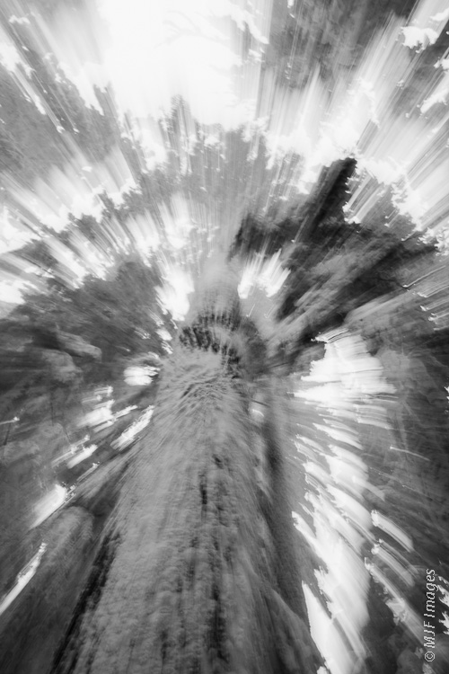 I haven't yet done much zoom-blurring.  This is a big, snow-basted fir tree I admired during a cross-country ski tour in Oregon.