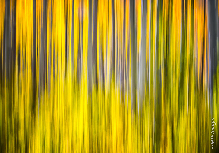Aspens in abstract.  This recent image from the Rockies was shot at 1/6 second while moving the camera straight down.