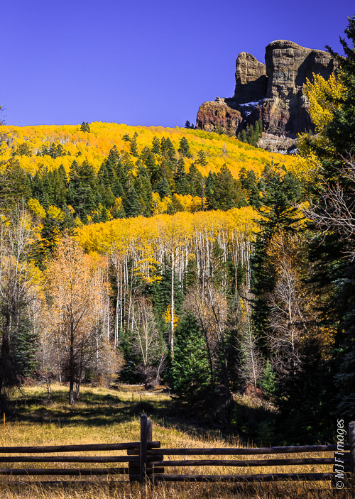 Aspens hold on in south-central Colorado.