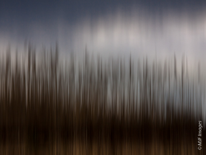 Click on this image for purchase options.  Since I was shooting these reeds in an Eastern Washington wetland at a longer focal length (160 mm.), I used a faster shutter speed (1/80 sec.).