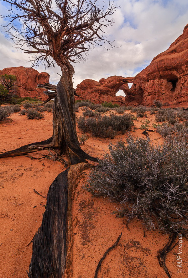 Another different sort of shot in the Windows area,  of Double Arch.