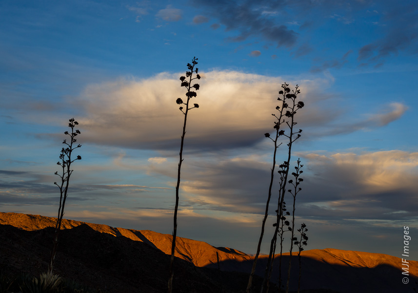 Sunset in the desert of Anza Borrego State Park, California, the light has that winter clarity.
