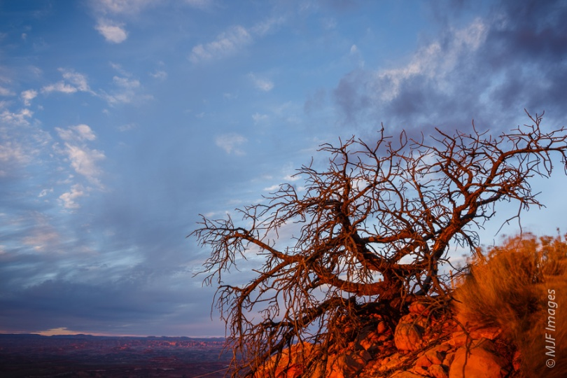 HANGING ON:  In southern Utah near Moab, trees and shrubs hang onto any outcrop they can.
