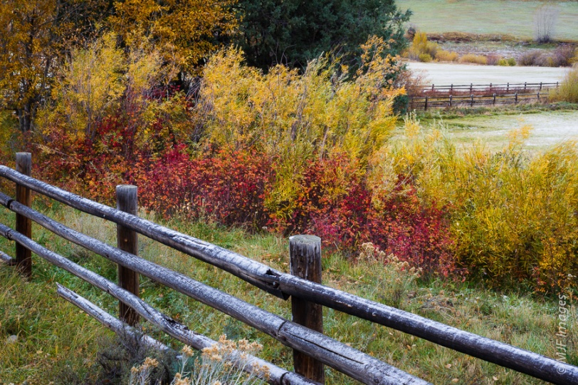Autumn's Microcosm:  This is an image from early in the trip, late autumn in the ranching country near Dallas Divide, Colorado.