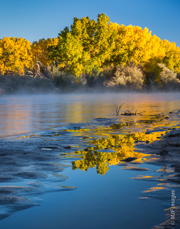 A frosty morning walk along the Rio Grande River is beautiful when the cottonwoods are in autumn leaf.