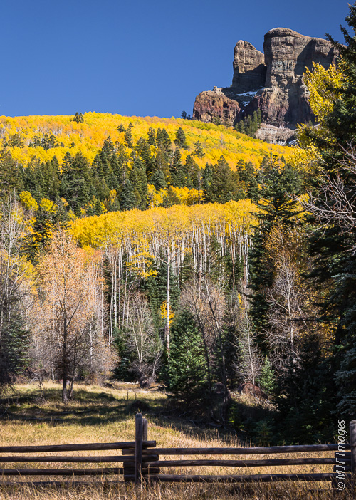 Colorado in fall means the quaking aspen are in golden leaf.