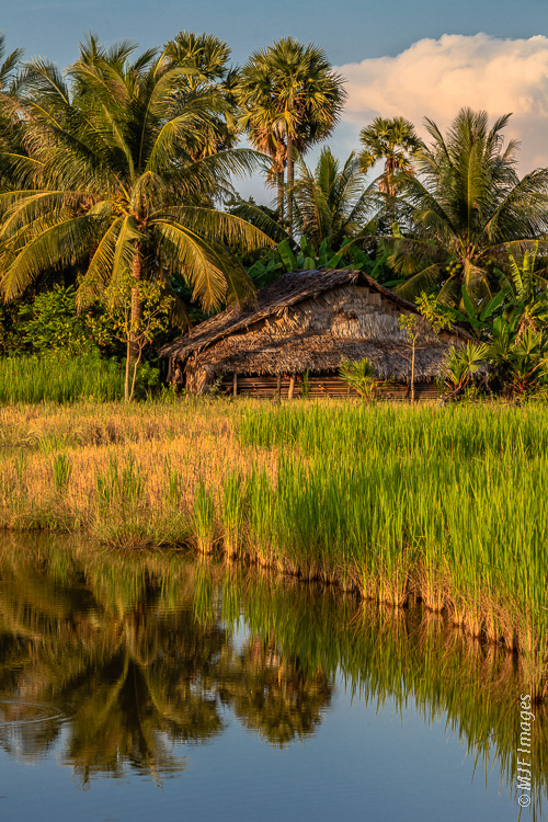 Several subtle elements come together here to place this shot: palms, rice paddy, distinctive house.  Take a guess where it is.