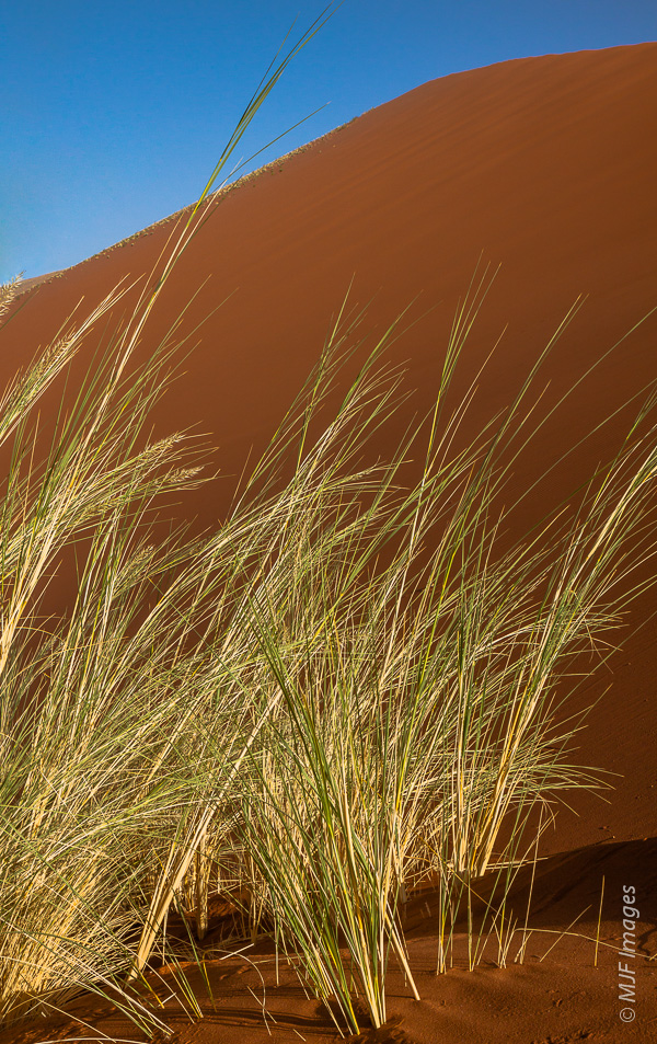 A clump of grass grows at the base of an enormous orange dune in Namibia's Namib Desert.
