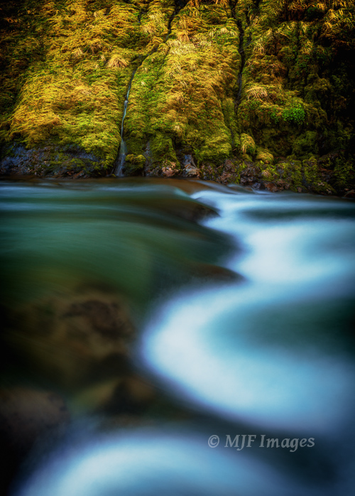 A pristine spring feeds a rushing river in Oregon's Cascade  Mountains