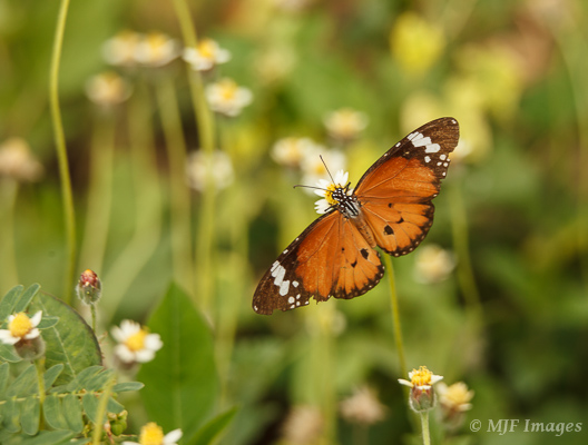 Wildflowers and insects are inseparable!