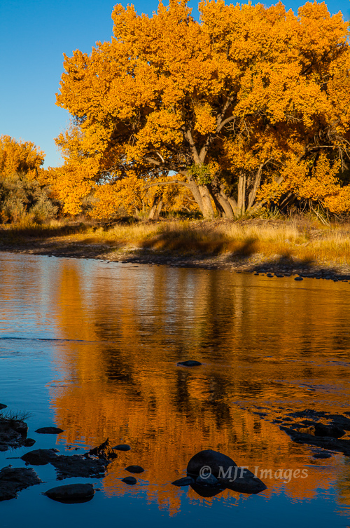 Fall along the Animas River of New Mexico.