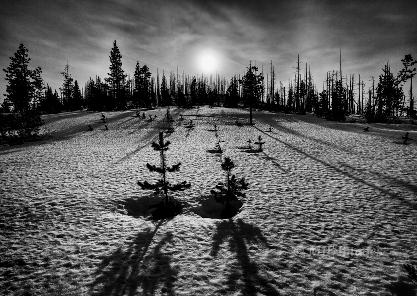 Moonlight on snow, Cascade Mtns, Oregon