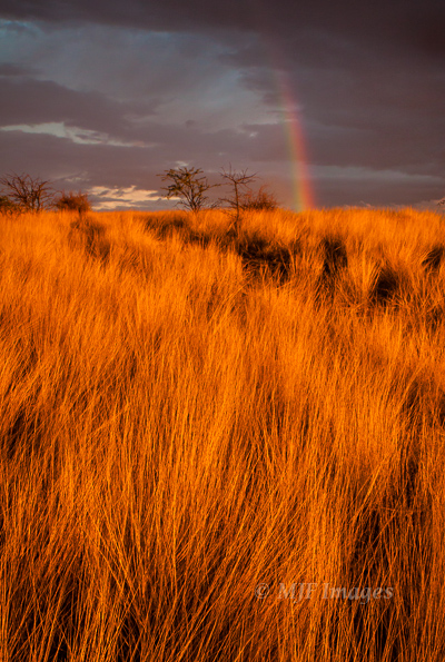 A rare place to spot a rainbow, the desert of Namibia.