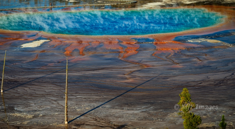 Life may have evolved in a pool like this one, Grand Prismatic Spring in Yellowstone National Park.