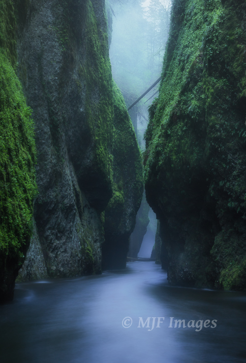 Oneonta Gorge is tough to access during spring's high water, but it's still my favorite time to visit.