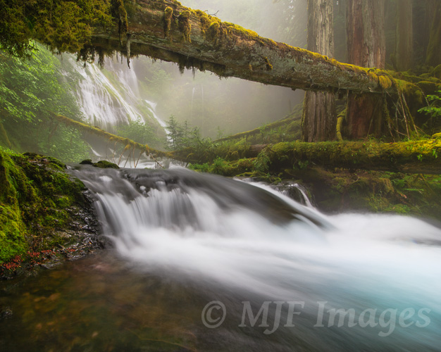 In spring, the forests of the western Cascade Range in the Pacific Northwest receive regular infusions of misty rain and fog.