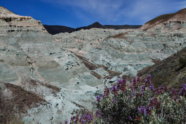 Blue Basin with purple sage in bloom.