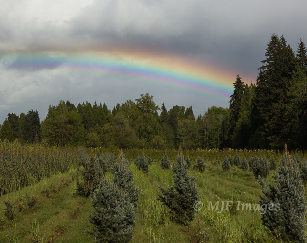 The countryside outside of Portland, Oregon is used to grow all sorts of shrubs and trees used in landscaping.