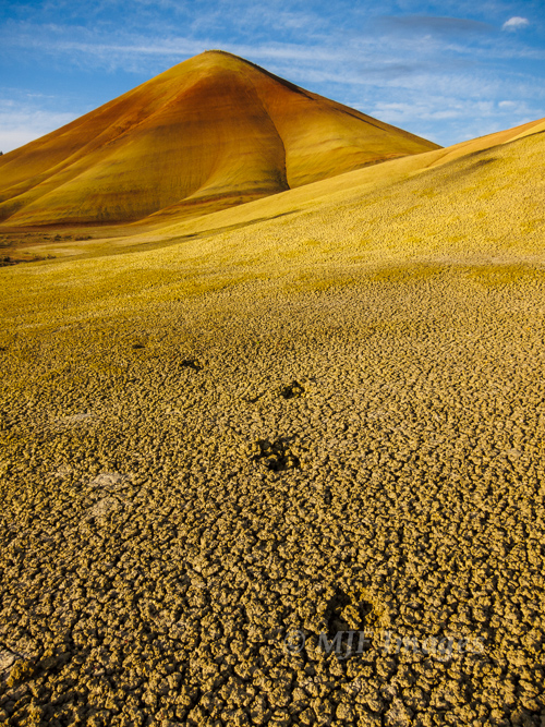 Deer don't heed the signs not to walk on the Painted Hills.
