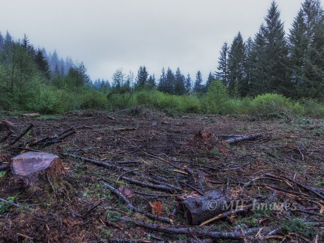 Ugly_Clearcut_5-4-14_60D_002-2