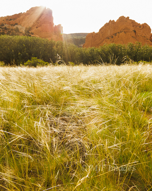 Shooting into the sun is probably not recommended with a limited camera, but I loved how the sun was hitting this tall grass at Garden of the Gods, Colorado.