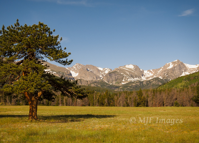 Moraine Park in Rocky Mountain National Park, Colorado.