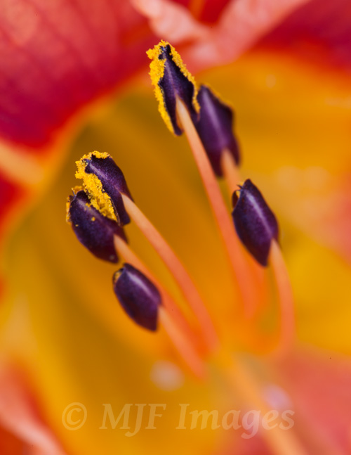 A macro shot of the inside of a flower.  Shallow depth of field is virtually guaranteed.    100 mm., 30 sec. @ f/16, ISO 200.