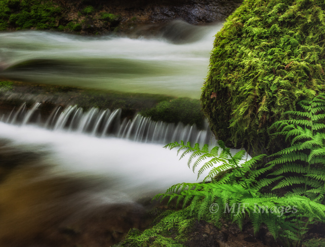 Elowah Creek, Columbia River Gorge, Oregon.