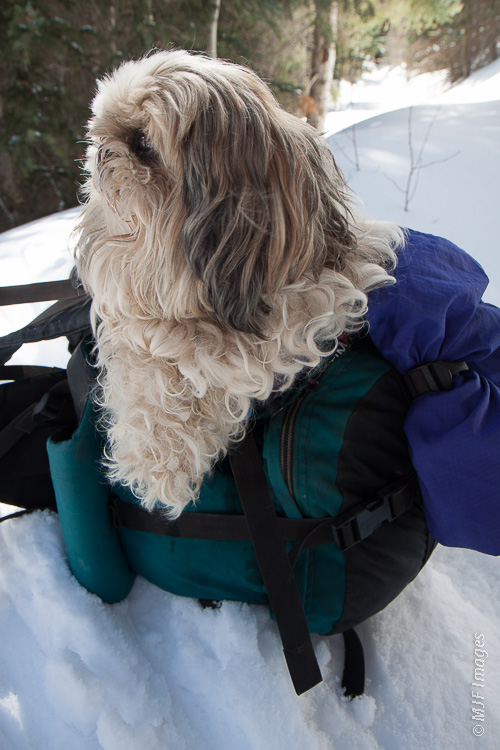 So he got a free ride in my pack, the only time he skied!