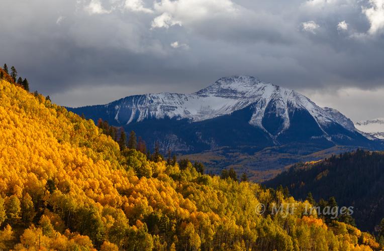 Quaking aspen in peak color not far from Telluride, Colorado.