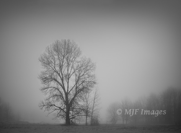 Fairly soft black and white processing is best for this simple image of fog and trees on the Sandy River delta in Oregon.