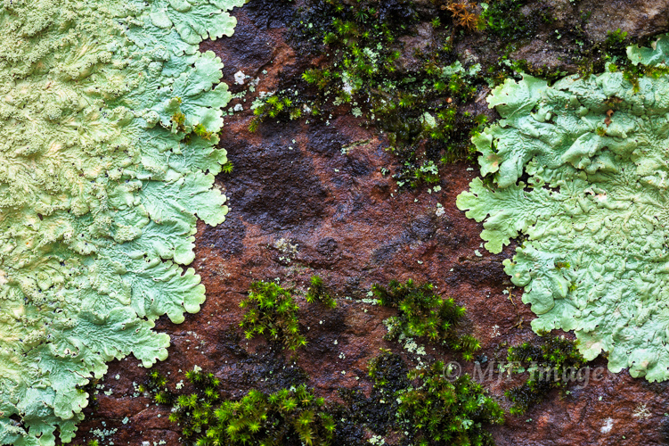 Ancient sandstone in the Ouachita Mountains is typically encrusted with moss and lichen.