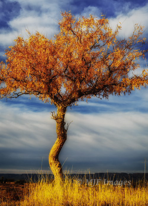 A tree, by itself, that I liked.