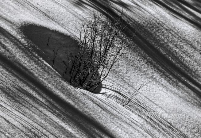 Sugar snow.