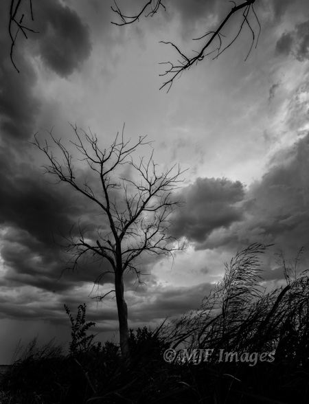 The weather and mood here suggested B&W even as I shot it.  So I just applied a simple B&W preset in Lightroom.