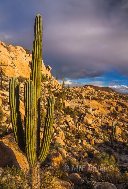 Warm Cactus