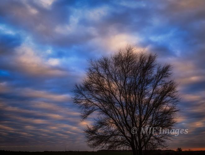 A bare winter tree