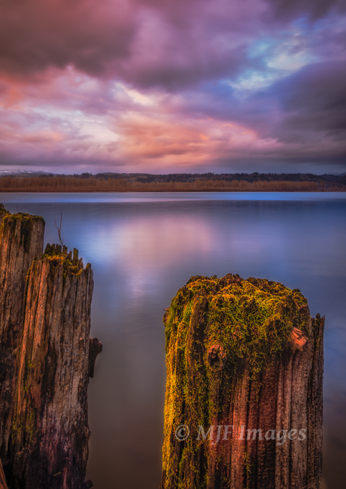 Excellent light falls on mossy pilings along the lower Columbia River in Oregon.
