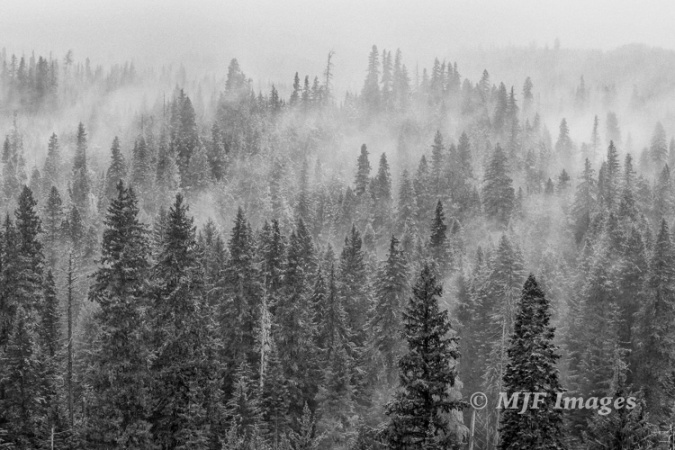 The forests surrounding Mount Mazama attract snowclouds in this image from the other morning.